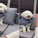 Buddy, o cachorro que adora sorrir para os seus donos quando eles lhe dão um sinal de positivo